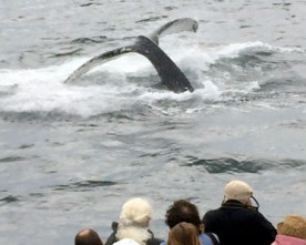 Whale Watching and Image Capture